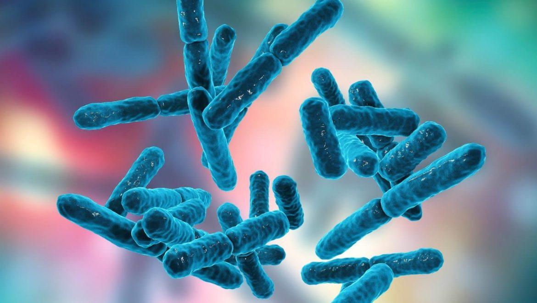 חמש סיבות ומצבים בהם תדעו שאתם זקוקים לפרוביוטיקה