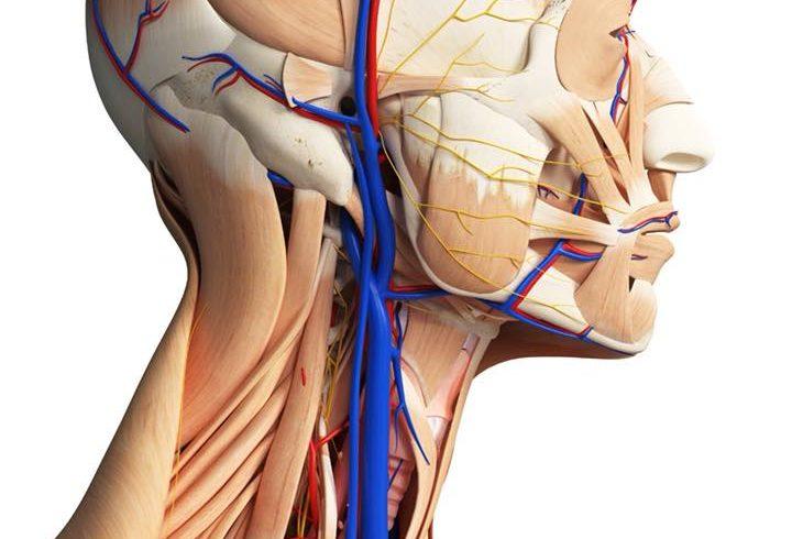 חשיבות דופלר צווארי לאבחון מוקדם של טרשת עורקים ומניעת התקף לב ושבץ מוחי