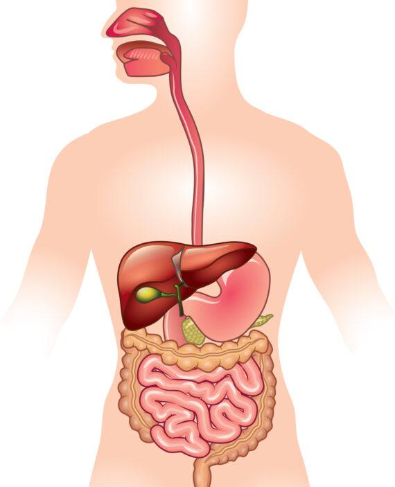 בדיקת GIMAP מקיפה למערכת העיכול